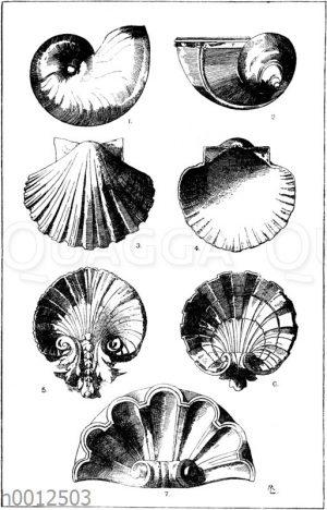 Muscheln und Schnecken als Ornamente
