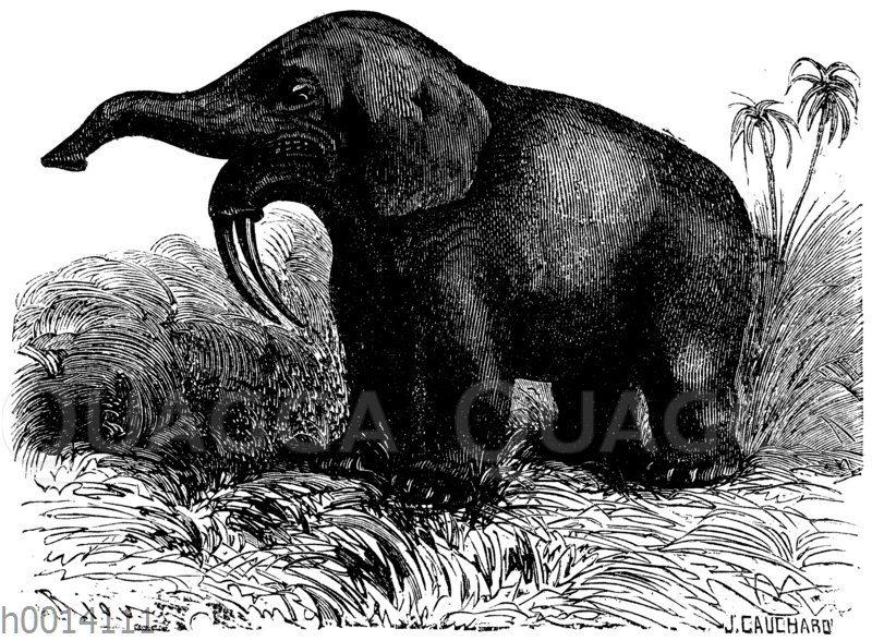 Dinotherium