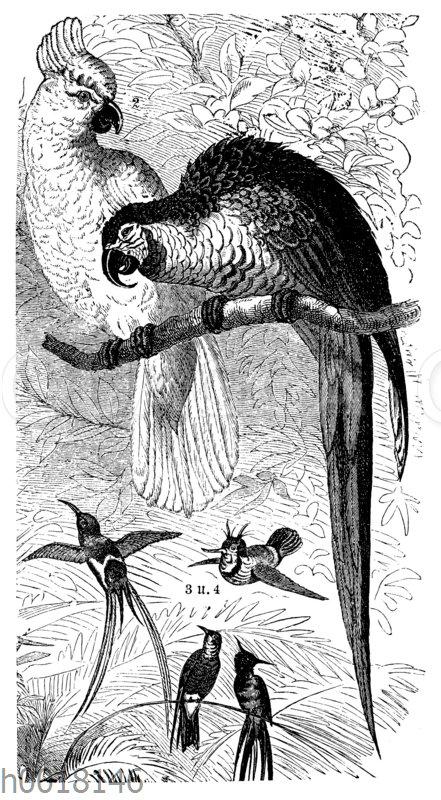 Mexikanische Prachtvögel: 1) Blaugelber Ara