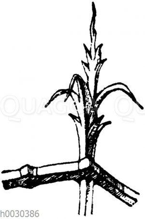 Blumen in Schmiedeisen: Eckpartie eines mittelalterlichen Gitters. (Viollet-le-Duc)