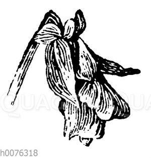 Vignette: Veilchenblüte