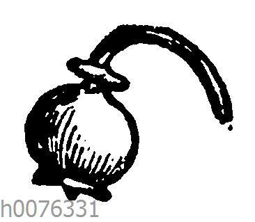 Vignette: Maiglöckchenblüte