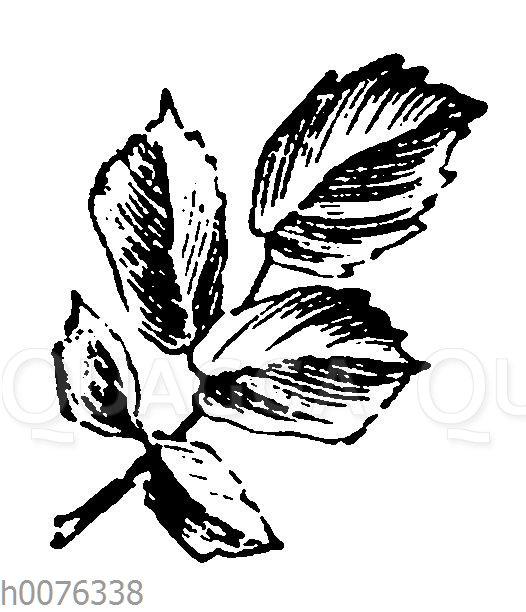 Vignette: Rosenblatt