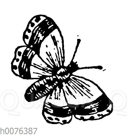 Vignette: Schmetterling