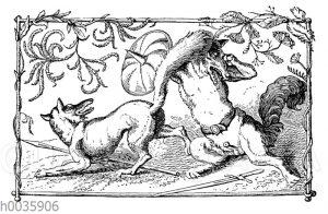 Zwei Wölfe kämpfen miteinander. Genrebild