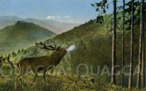 Röhrender Hirsch in Bergwald
