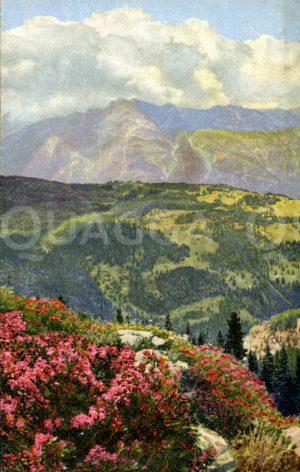Bewimperte Alpenrose vor Alpenlandschaft