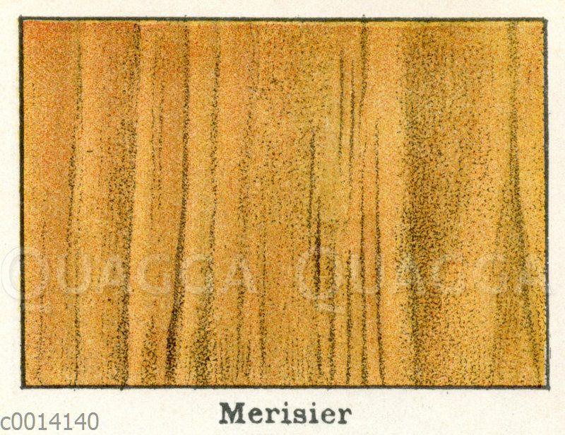Kirschbaum-Holz