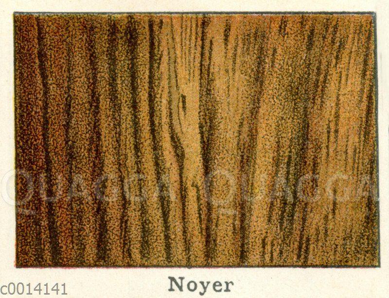 Holzart: Nussbaum