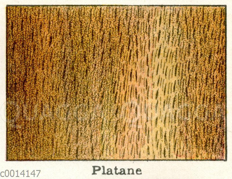 Holzart: Platane