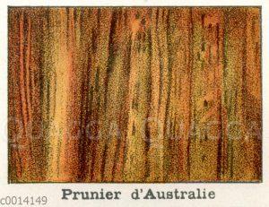 Holzart: Prunier d'Australie