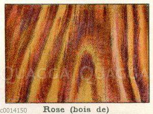 Holzart: Rose