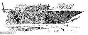 Pflanzen des Buchsbaums als Einfassung