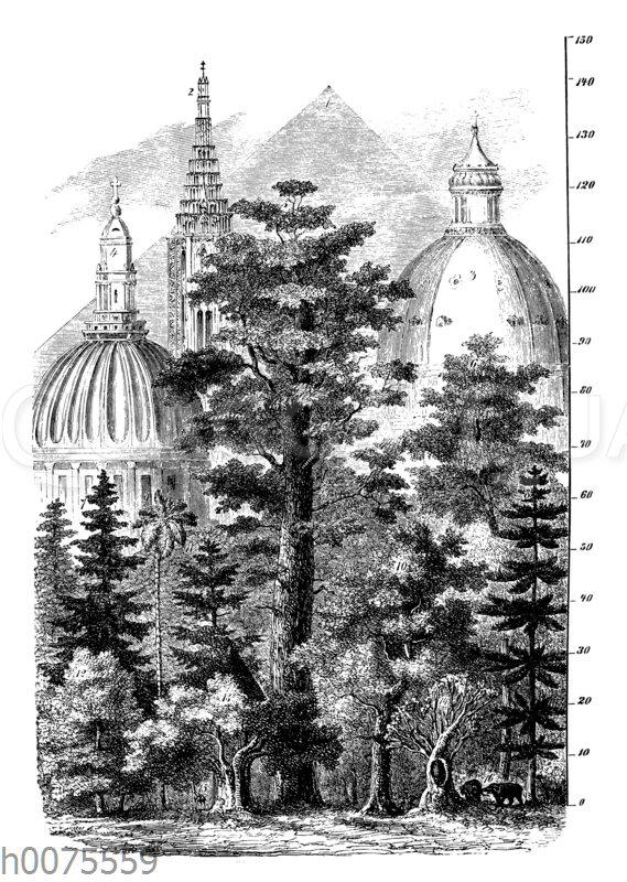 Zusammenstellung der größten Gewächse und der höchsten Bauwerke der Erde