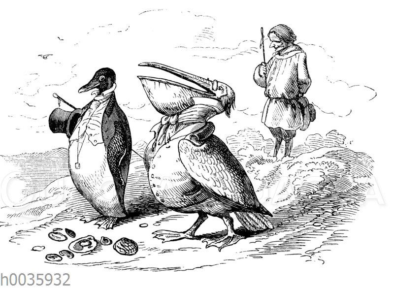Pinguin und Pelikan in festlicher Kleidung