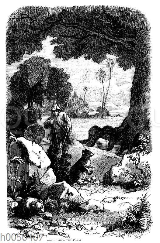 Robinson Crusoe erlegt zum ersten Mal ein Agouti