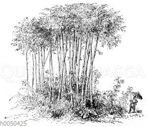 Robinson Crusoe und das Bambusrohr