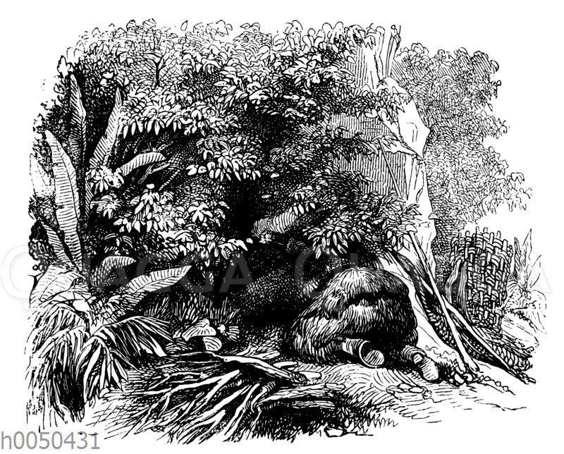 Robinson Crusoe und die Grotte