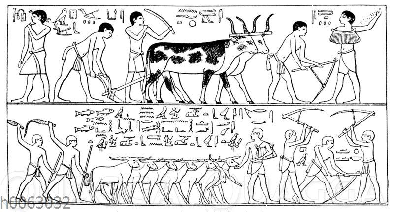 Feldarbeit mit langhörnigen Rindern im alten Ägypten