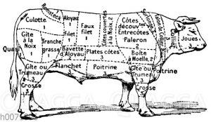 Fleischeinteilung beim Bullen