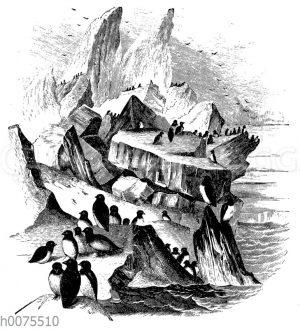 Eisberg mit Pinguinkolonie