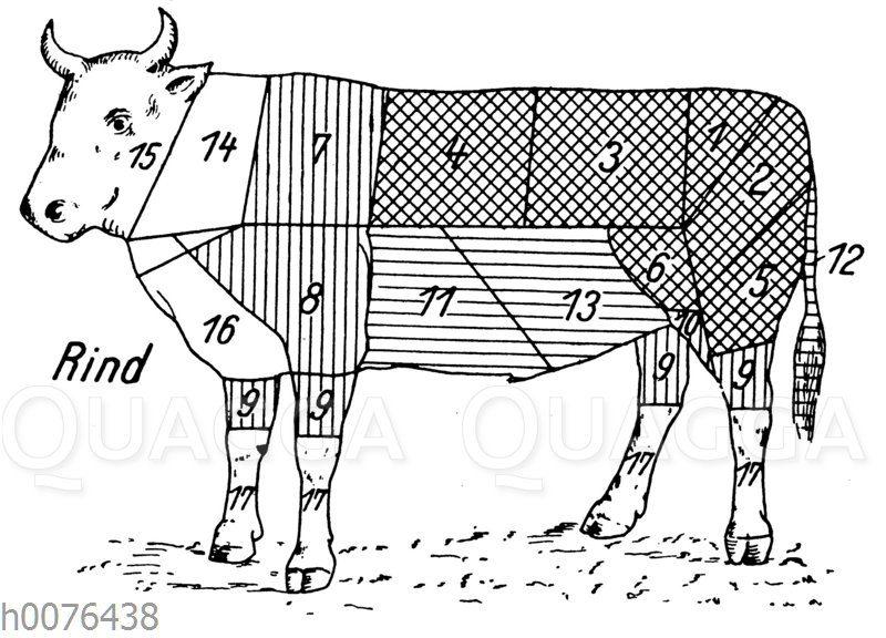 Fleischeinteilung und Fleischqualität beim Rind