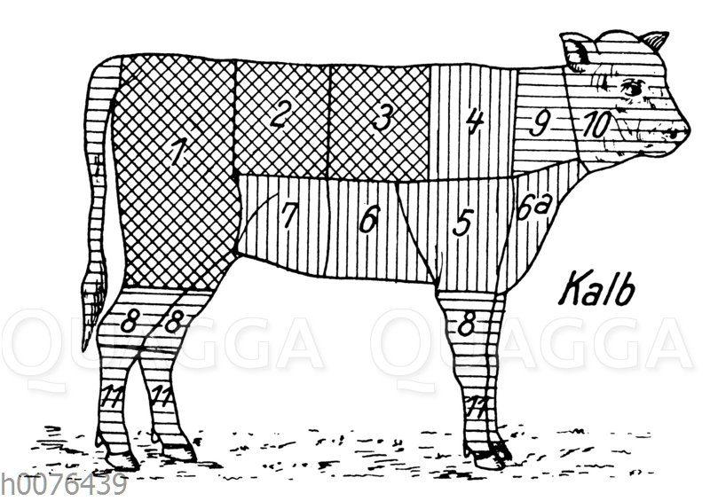 Fleischeinteilung und Fleischqualität beim Kalb