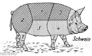 Fleischeinteilung und Fleischqualität beim Schwein