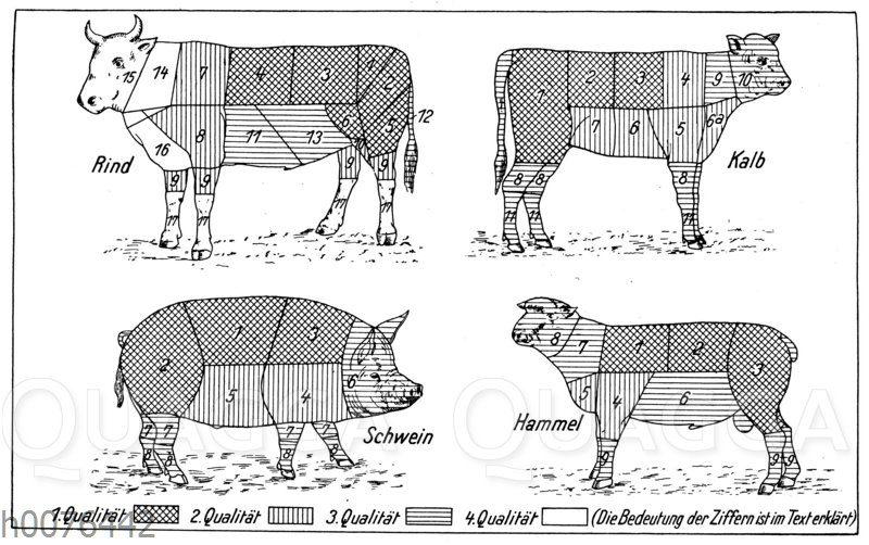 Fleisch und Fleischqualität von Rind