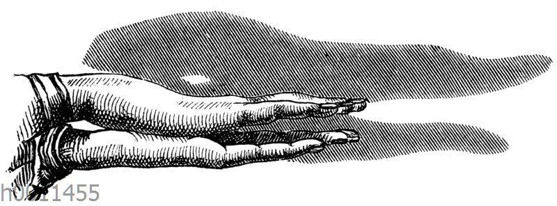 Schattenspiel: Krokodil