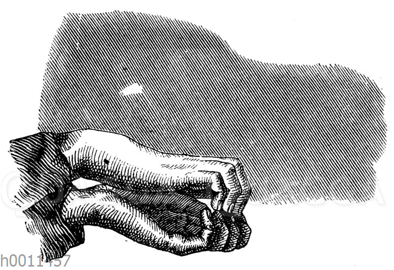 Schattenspiel: Nilpferd