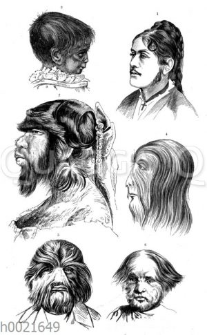 Köpfe verschiedener Haarmenschen