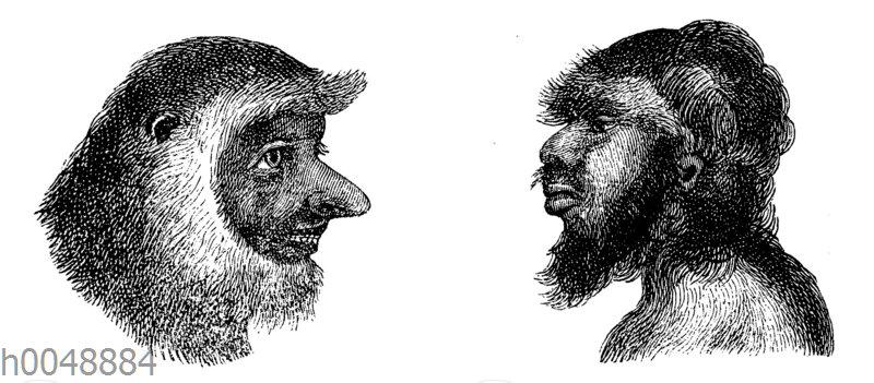 Julia Pastrana im Vergleich mit einem Nasenaffen