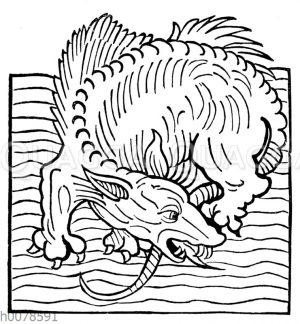 Meeres-Drache
