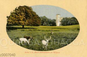 Putbus auf Rügen: Fürstliche Schlosskapelle am Wildpark mit weißem Damwild