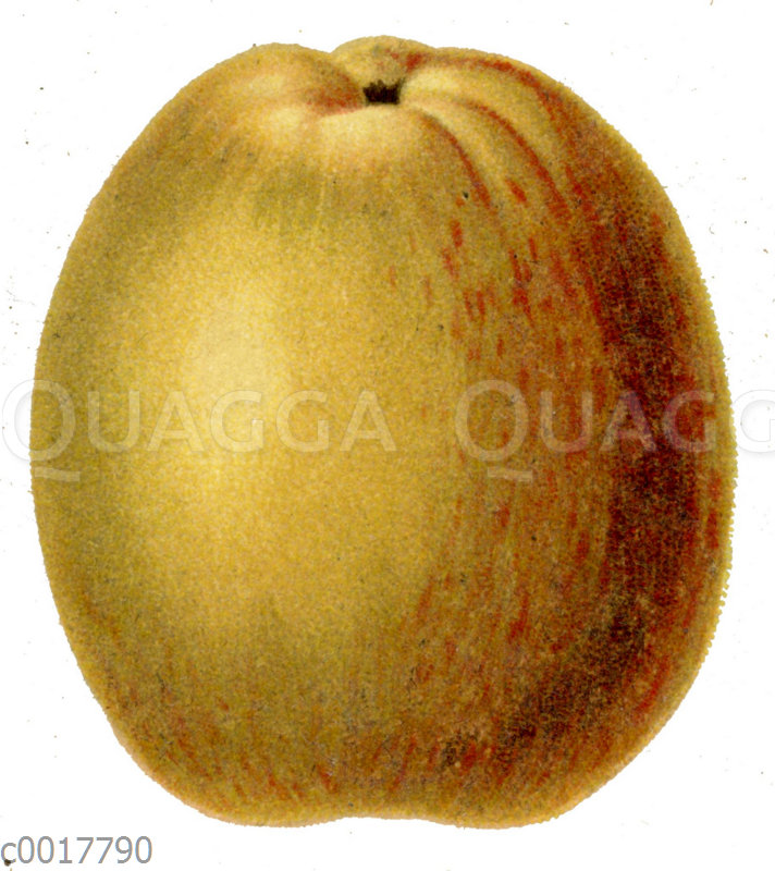Prinzenapfel