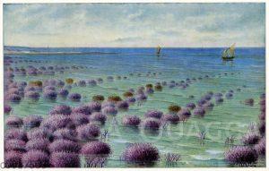 Madrepora-Korallen an der Küste von Australien