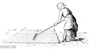 Gartenarbeit: Einharken des Samens mit dem Rechen