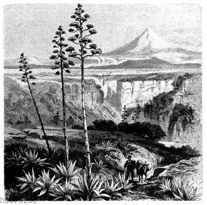 Agave in der mexikanischen Hochebene