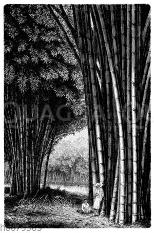 Bambus auf Java