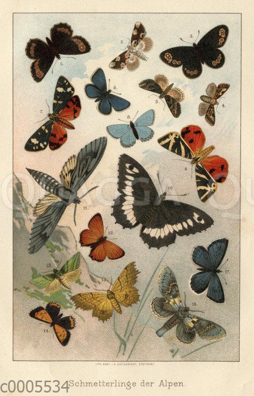 Schmetterlinge der Alpen