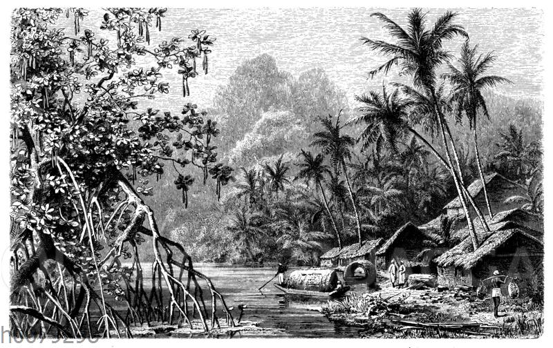 Kokospalmen (Cocos nucifera) und Mangroven (Rhizophora) auf Ceylon