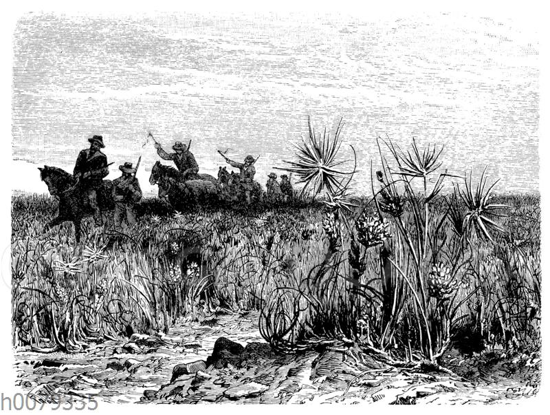 Inneraustralische Spinifex-Wüste