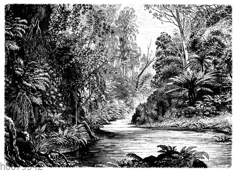 Vegetation am Watt-Fluss im Monda-Tal (Victoria)