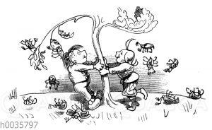 Max und Moritz schütteln Maikäfer vom Baum