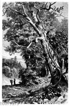 Efeu am Stamm einer Eiche
