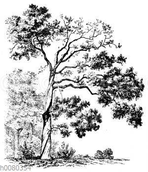 Folgen des Blitzeinschlags an einem Baum