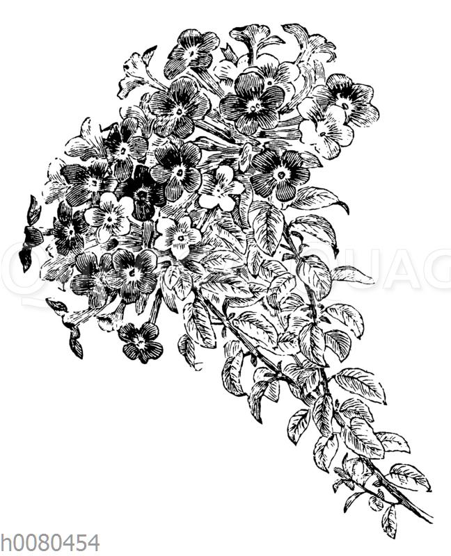 Marmeladenbusch