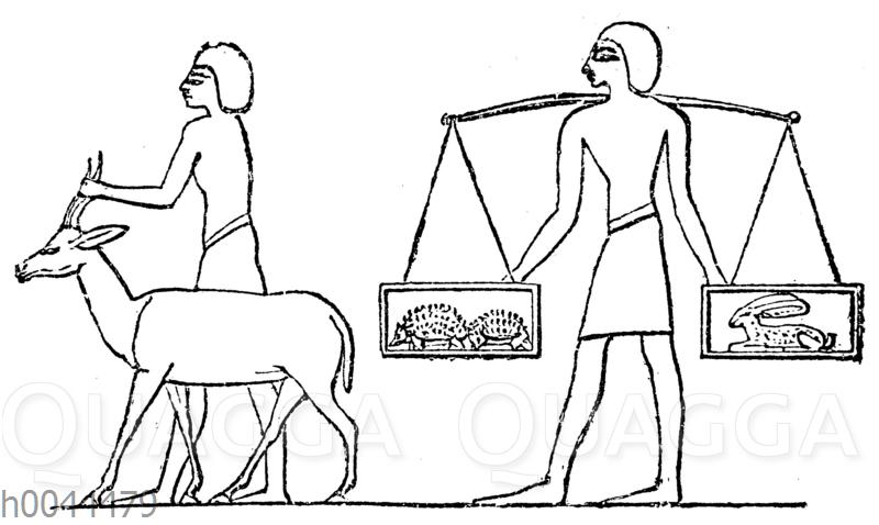 Heimbringen der Jagdbeute: Gazelle. Stachelschweine