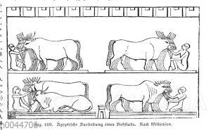 Ägyptische Darstellung eines Viehstalls